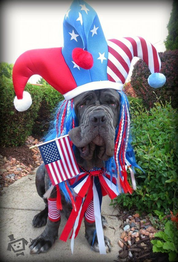 fourth of july dog collars