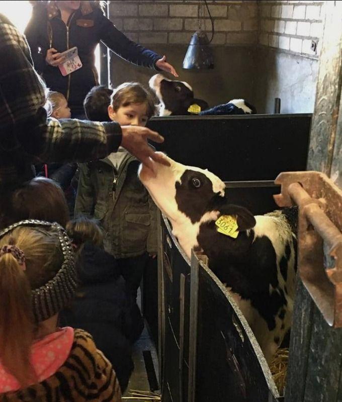 Basisschool de klim-op, Haaren - Jeelo zorgt er mede voor dat de leeromgeving van een kind vergroot wordt door alles wat er in de omgeving te leren is.  Groep 1-2 heeft de boerderij bezocht en geleerd hoe koeien daar leven, hoe ze gemolken worden en zelfs deze verse melk mogen proeven. En ten slotte mocht een kijkje in de tractor niet ontbreken.Wat een betrokkenheid...zo leren kinderen meer.