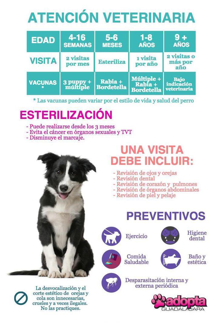 Infografía Atención Veterinaria en Perros | Adopta.mx