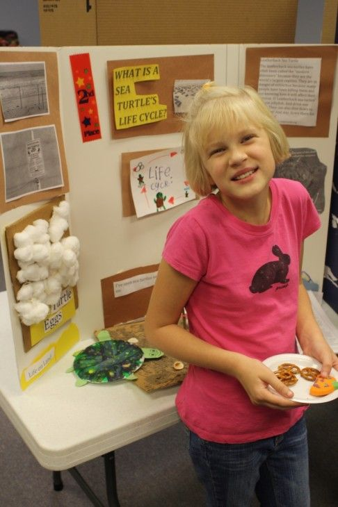 What is a Sea Turtle's Life Cycle – Fourth Grader