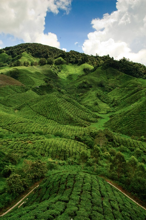 Cameron Highland, Malaysia - I've accomplished my goal to visit there.  It was really beautiful when I saw with my own eyes :)