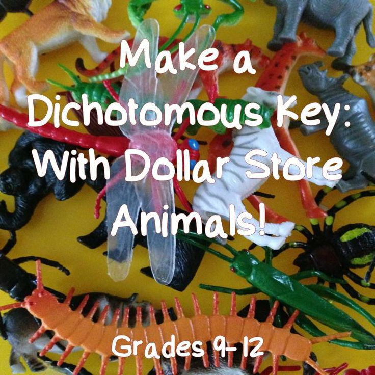 Instructions to help your students make their own dichotomous key with those packs of dollar store animals! For Grades 9-12.