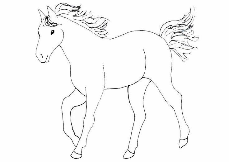 unterwasserwelt malvorlagen  malvorlagen pferde