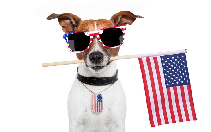 5 Tips to Keep Pets Safe on the Fourth of July from Parade Magazine