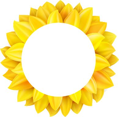 Sunflower Facts Tips How To Care For Sunflowers