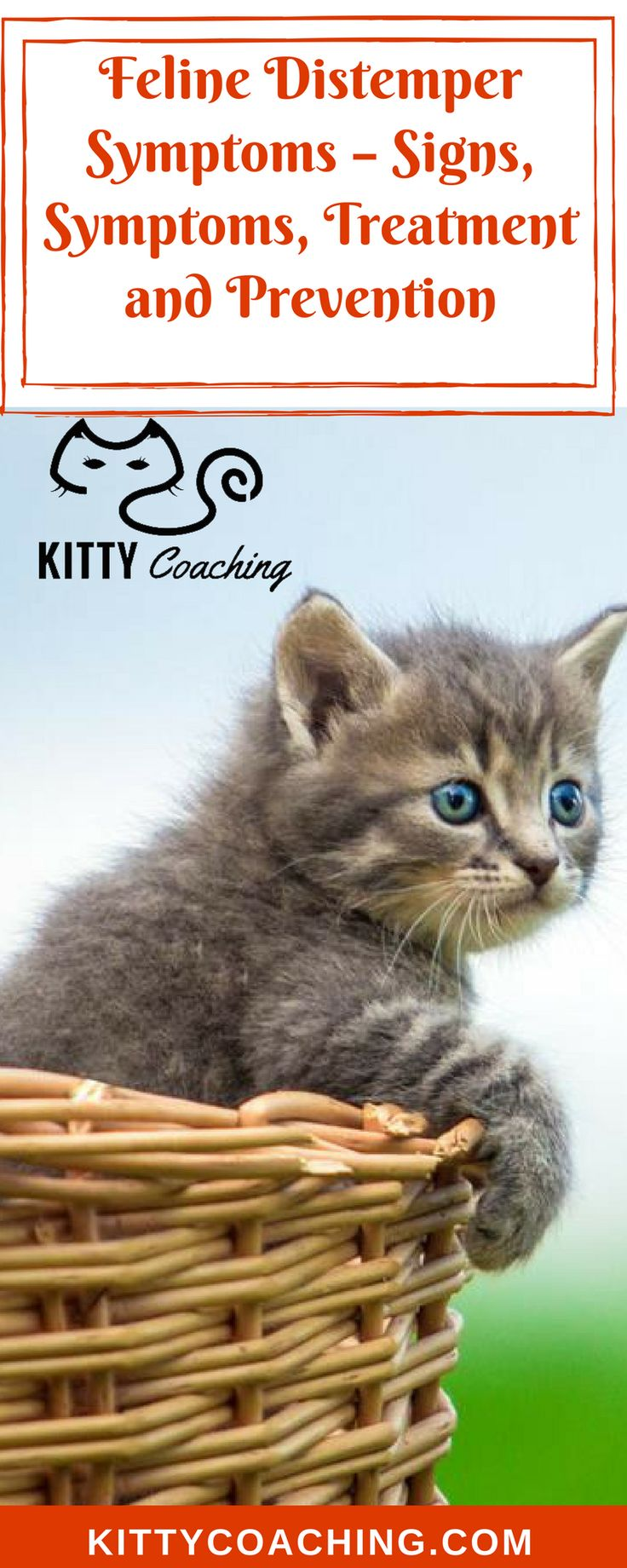 Feline Distemper Symptoms – Signs, Symptoms, Treatment and Prevention: http://www.kittycoaching.com/health/feline-distemper-symptoms/