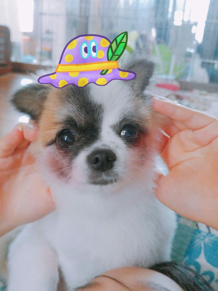 My pet lovely puppy♥