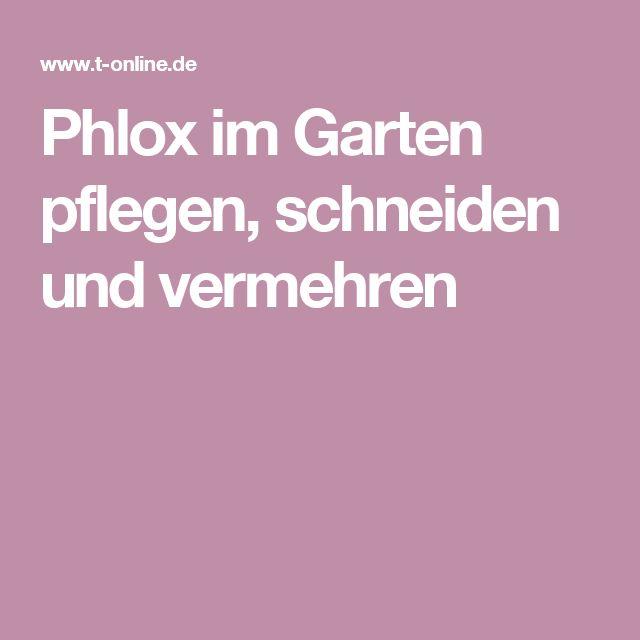 Phlox im Garten pflegen, schneiden und vermehren
