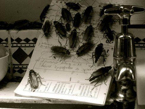 remedios para acabar con las cucarachas