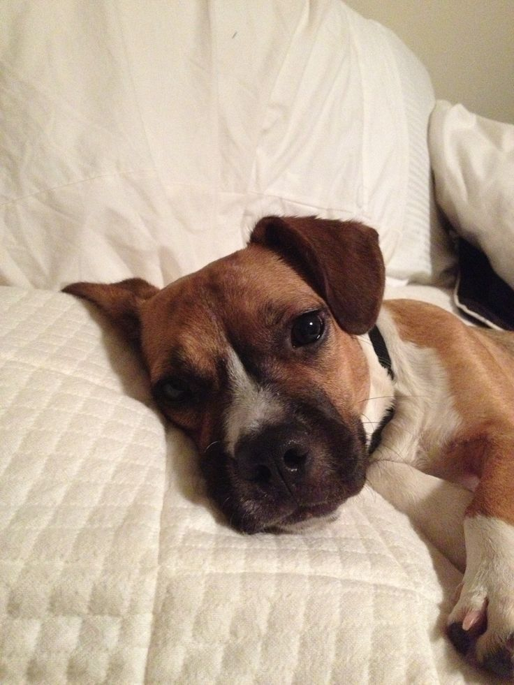 mix. This is Willie, out rescue dog from