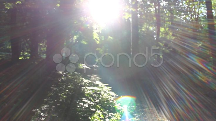 Sun Glare In The Forest - Stock Footage | by botiordog