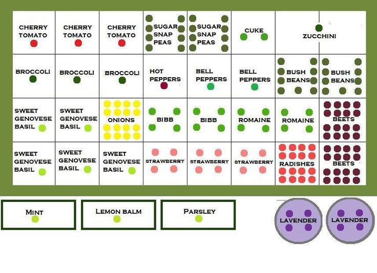 Square foot garden layouts for different regions and for Layout garden plots