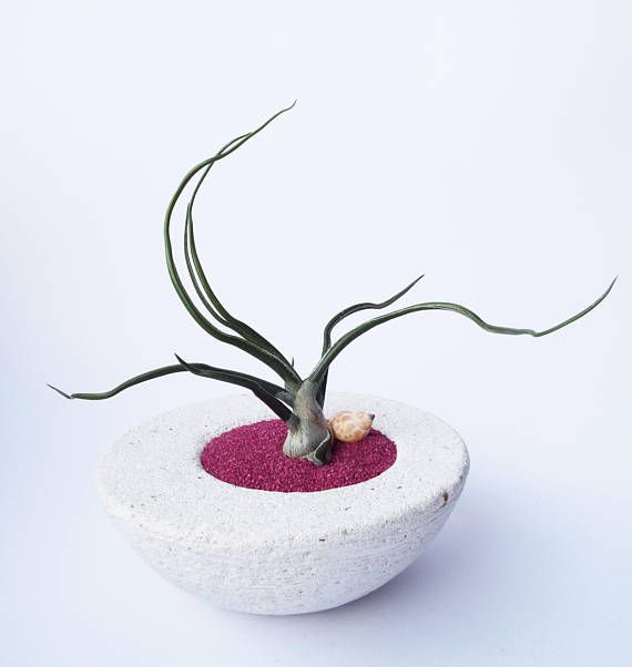 #homedecor #tillandsia #airplant #interiordecor #decor #homeplants #airplants #airplantdecor #garden #pflanzen #luftpflanzen #pflanze #garten #zengarden #gardening #interiordesign #modernplanter #miniplanter #plantholder #airplantholder #airplantplanter #plant #plants #interiordesign #greenlife