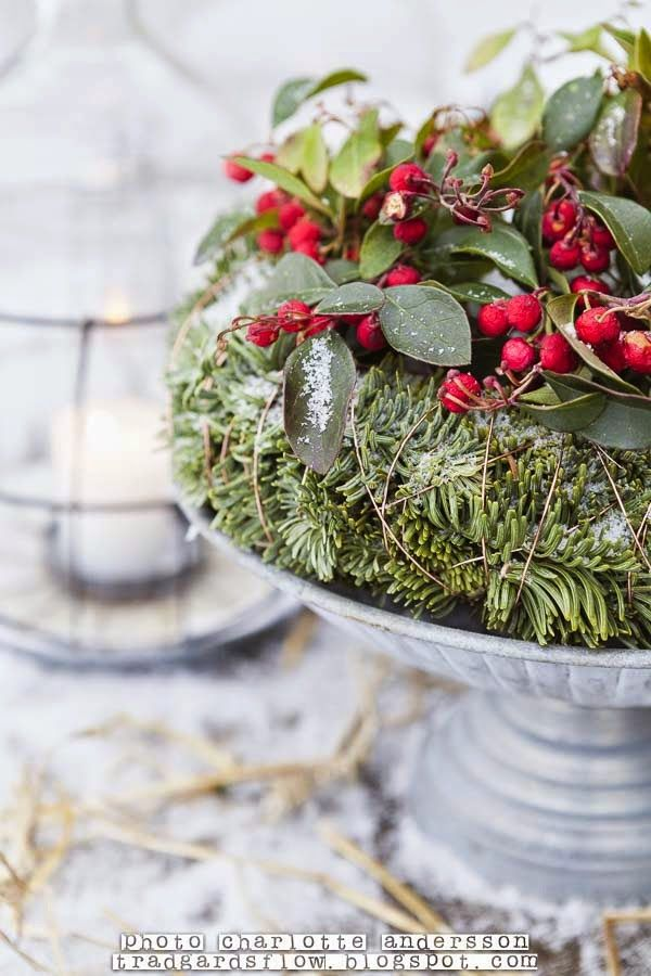 Winter greens and red berries table centerpiece