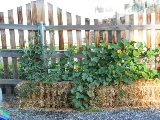 Liven Up Your Yard With This Useful Information. : Gardening · Gardening  For BeginnersOrganic Gardening ...