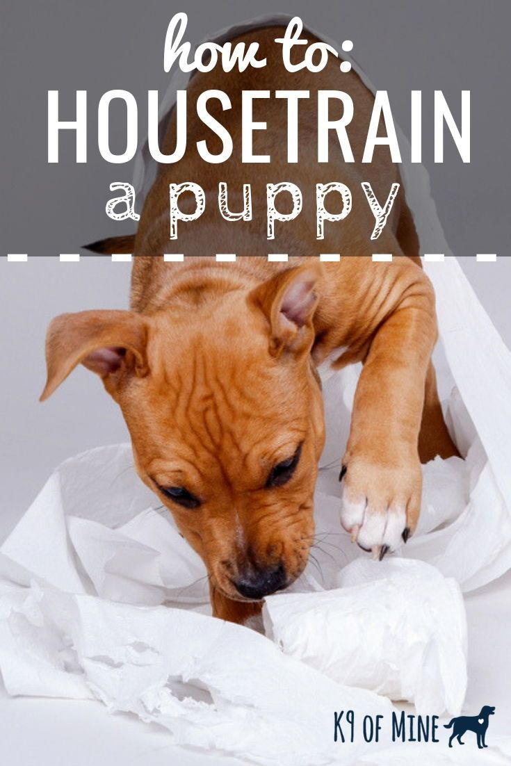 How To Housetrain A Puppy Common Problems Tips Tricks Dog