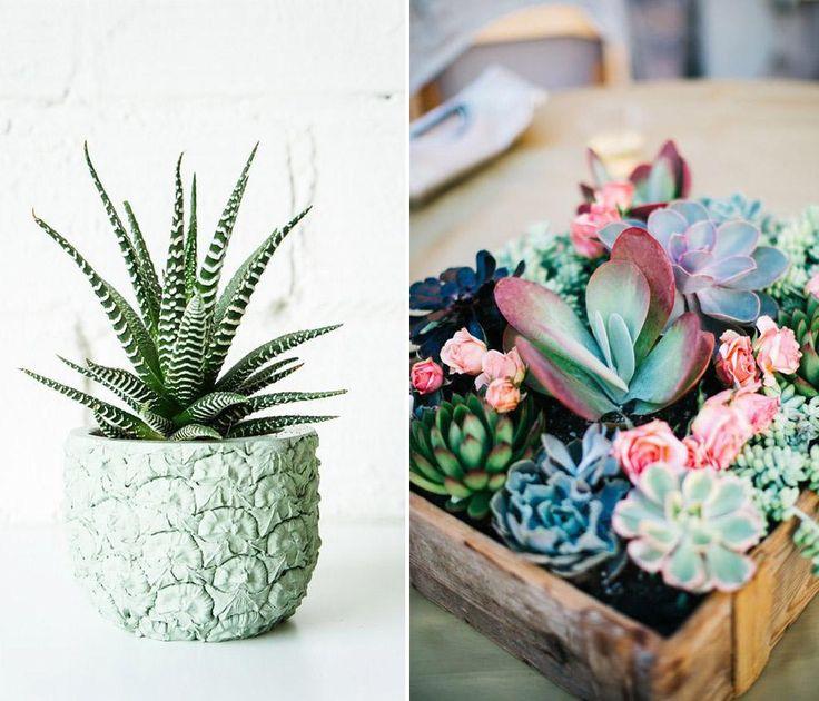 Si vous désirez ajouter de la verdure à votre environnement et ce, en toute sécurité, voici 10 plantes non-toxiques qui n'empoisonneront pas vos animaux!