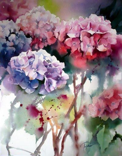 Hydrangeas watercolor by Jean Claude Papeix