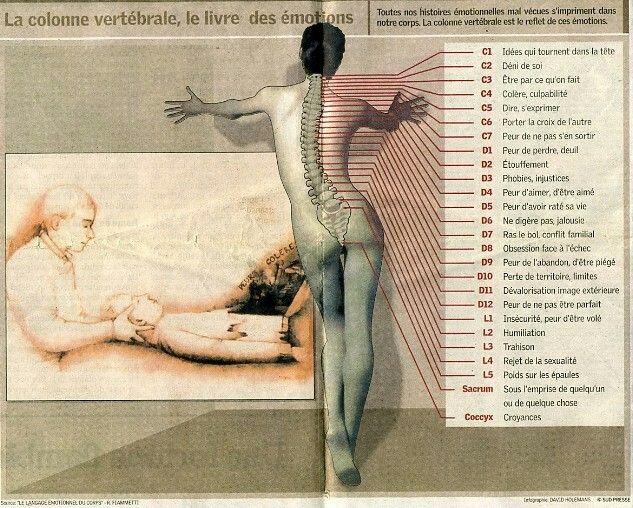 """Illustration tirée du livre de R.Fiammetti : les cartes du langage émotionnel du corps avec un """"décodage de notre dos""""."""