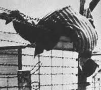 Image result for majdanek concentration camp