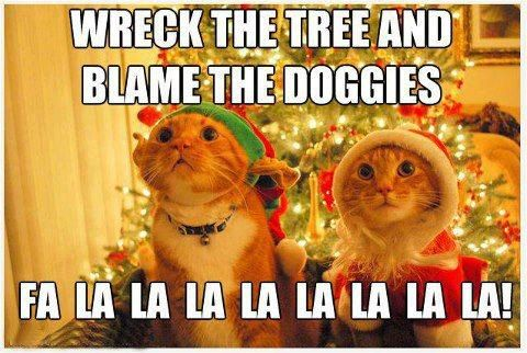 Funny Christmas Kitties! :D
