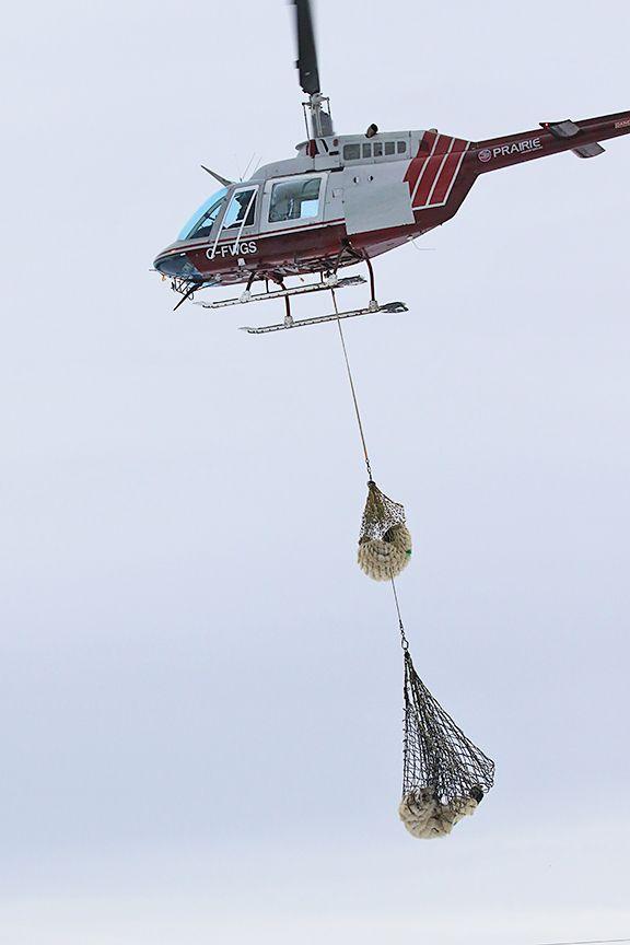 polar-bear-rescue-3