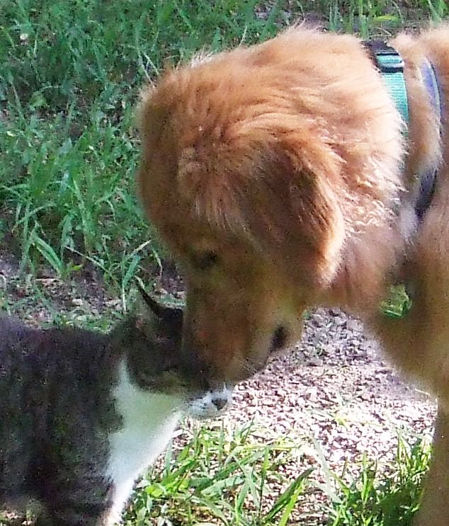 How To Introduce A New Dog To Resident Cats