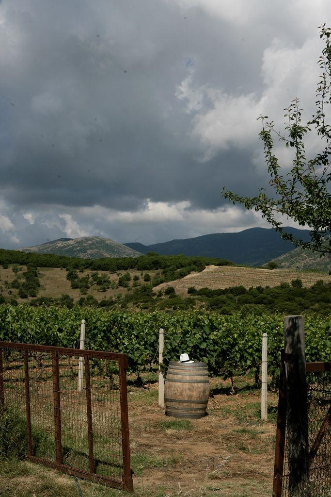 Tasting on the spot, at our vineyard at 750m altitude #rapsani #tsantali #wine #adventure #epxerience #oenotourism