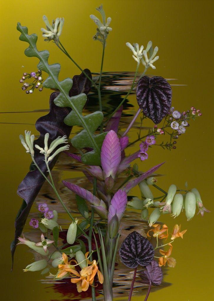 Sandra Kantanen, Distortion 1, 2017, Purdy Hicks Gallery