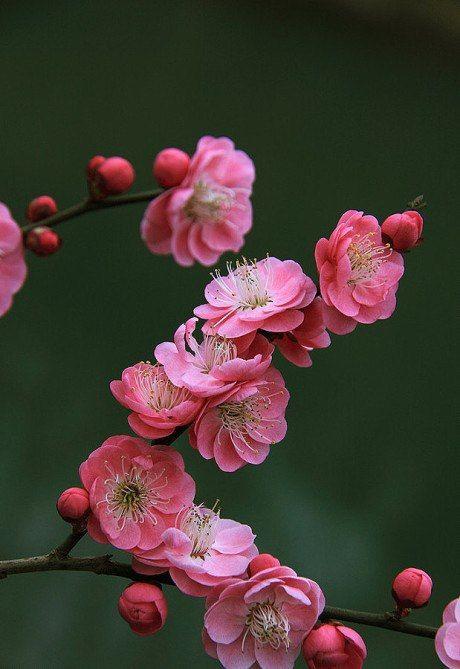 Peach, Zhuhai, China