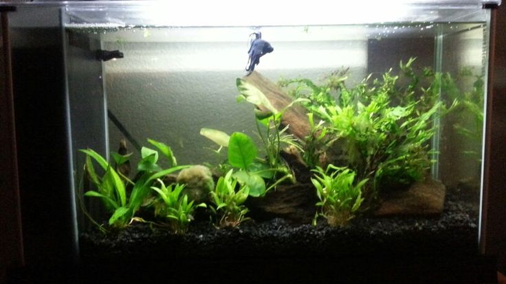 84 best images about aquascapes on pinterest for Fish tank vs pond