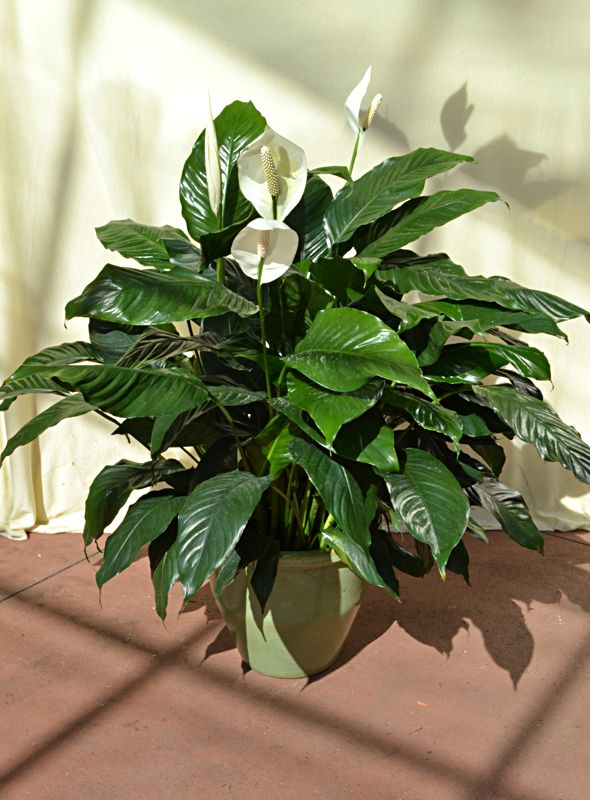Beat the Winter Blues with Tropical Plants
