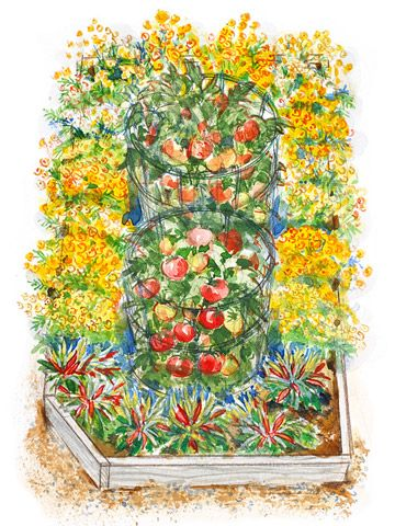 Small garden plan, 14' x 9', with tomatoes, marigolds, and peppers