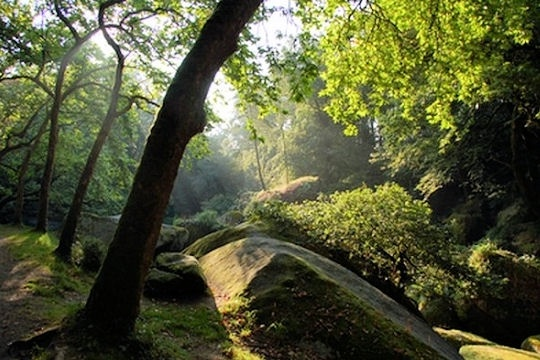 Mythical Huelgoat forest, Brittany, France ; Forêt de Huelgoat, Bretagne, France