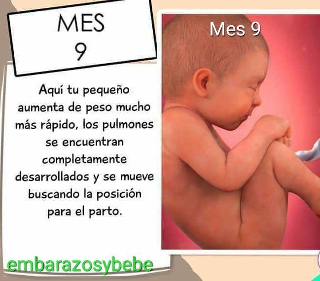 desarrollo del bebe mes a mes de diabetes gestacional