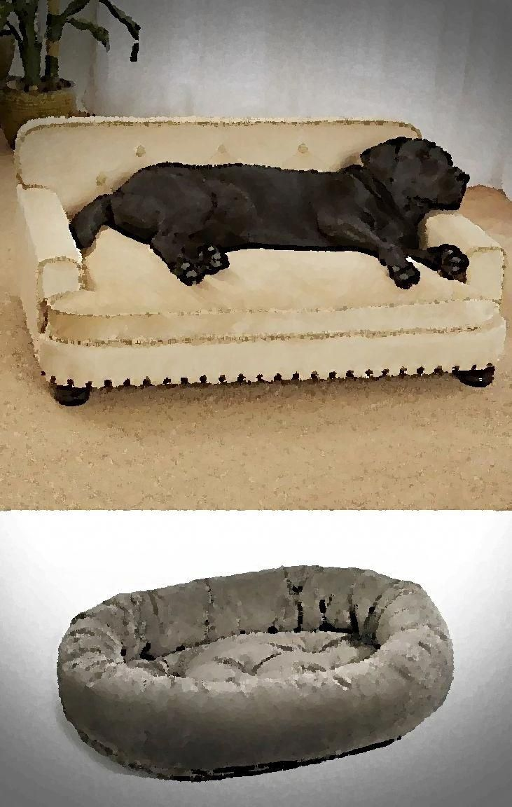 Ultimate Dog Bed Dog Moga Dog Beds For Small Dogs Cool Dog Beds Elevated Dog Bed