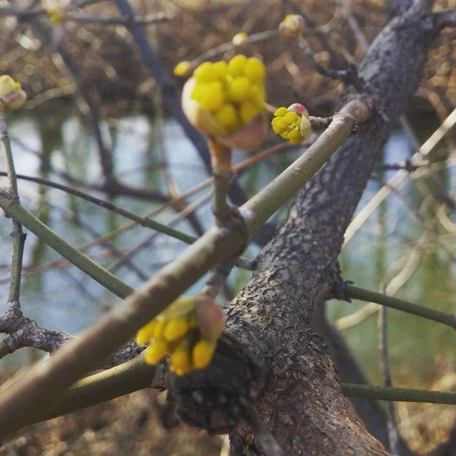 Spring Is Coming Der Fruhling Kommt Blume Blumen Pflanze Pflanzen Garten Garten Spring Fruhling Nature Baum Wald Pflanzenwelt Plants Grapes