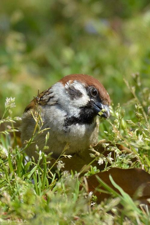 この時期、いろいろあって疲れちゃうよねー。 #スズメ #Sparrows #鳥 #Birds #東京 #写真好きな人と繋がりたい...