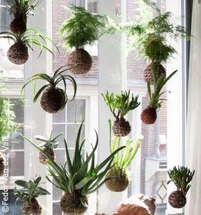 kokedama fedor300 Addio bonsai, arrivano i kokedama, piante zen che volano
