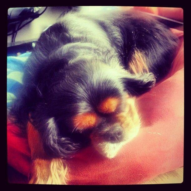 My pooch. ....:-)
