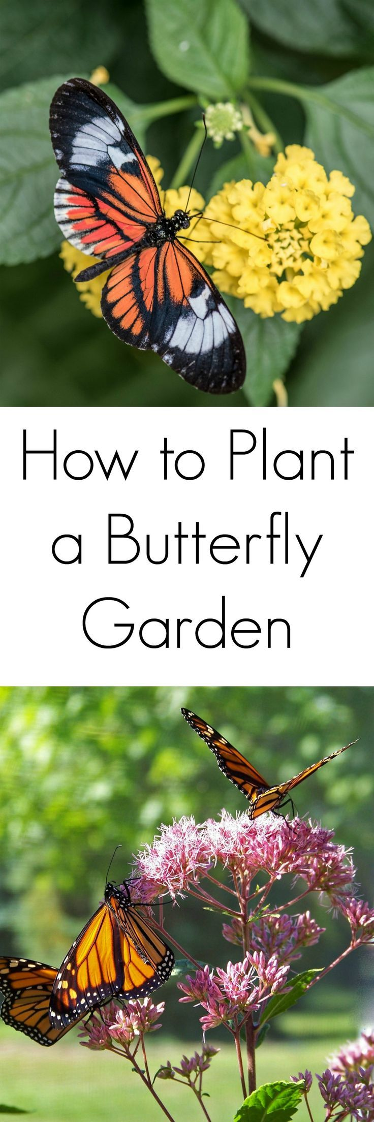 Butterfly Garden Ideas butterfly gardening easy home decorating ideas Tips For Planting A Butterfly Garden