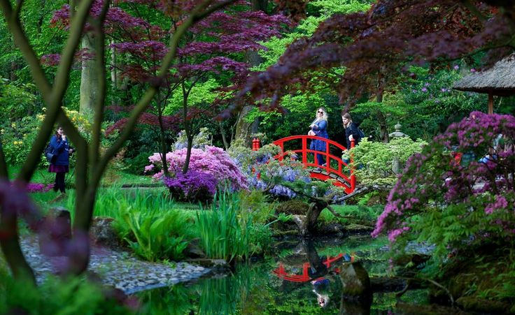 Japanse Tuin openstelling - DenHaag.com