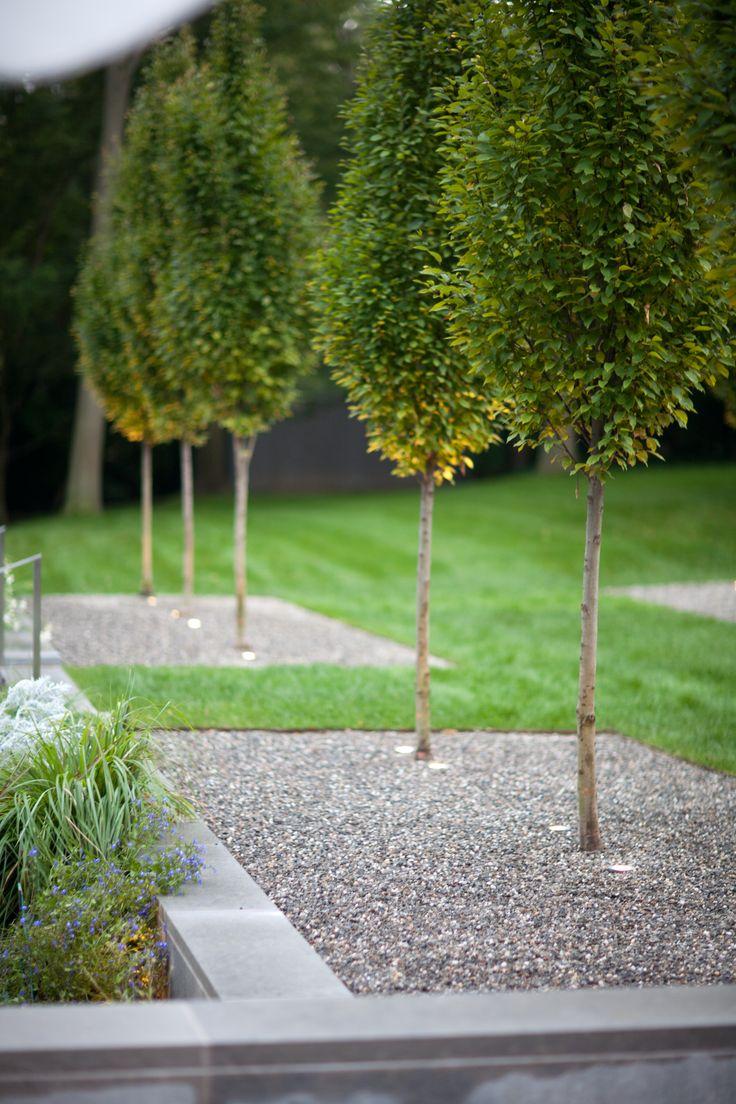 Doyle Herman Design Associates Landscape Design, modern garden, clean lines in the landscape, row of trees, pyramidal hornbeams, trees in gravel