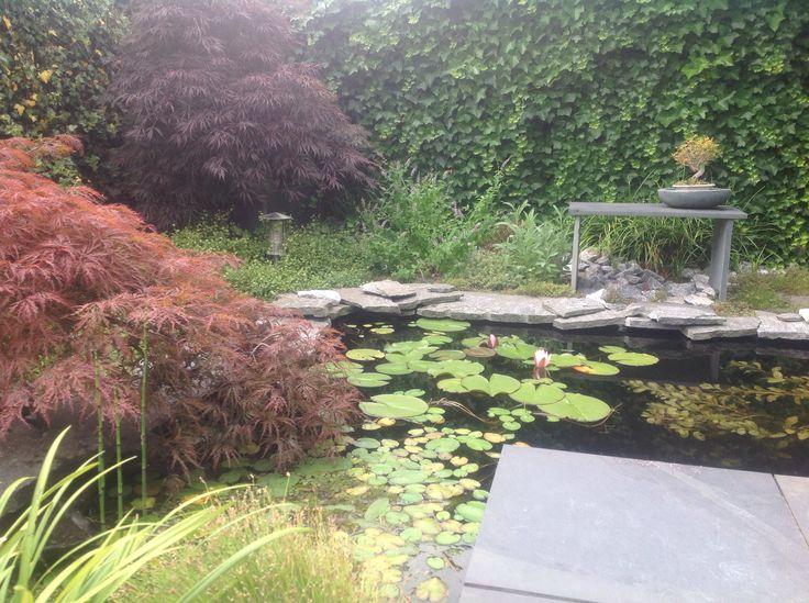 Mijn japanse tuin japanse tuinen pinterest tuin - Tuin landscaping fotos ...