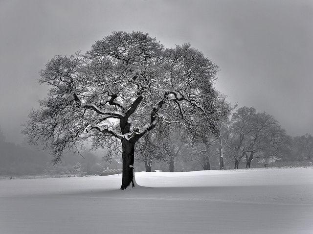 Winter in Merstham, Surry, UK Courtesy of Berit, Ben124 on Lauren Sovesta @ Loallee