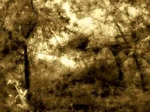 681 best images about van morrison on pinterest john lee - In the garden lyrics van morrison ...