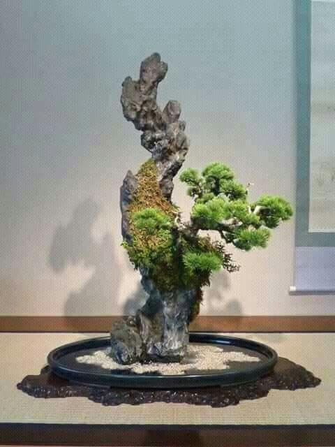 Muí original,el tronco superado a las ramas