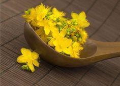 Tα top 10 βότανα του κόσμου