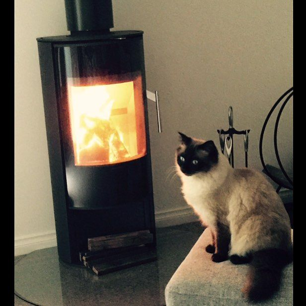 Buying a wood heater just so your pets can stay warm ✔️ 😻🔥 // Shout out to Vic for the photo, we hope you enjoy your new Morso S10-40 #Morso #Morsofireplaces #creativefireplace #fireplaces #fireplacedesign #interiordesign #livingarea #design #contemporarydesign #fires #woodheater #Melbourne #art #creative #styling #interiorstyling #interiordesign #winter #Danishdesign #Europeandesign #designaward #innovation #create #designerfires #architecture #modernrooms #modernhomes #homes #builders…