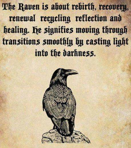 If a raven totem has come into our life, magic is at play. Raven activates the energy of magic and links it to our will and intention. With this totem, we can make great changes in our life; the ability to take the unformed thought and make it reality. The raven shows us how to go into the dark of our inner self and bring out the light of our true self; resolving inner conflicts which are long been buried. This is the deepest power of healing we can possess.